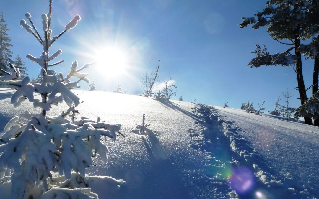 Im Kraftfeld von Mutter Erde – die Schnepfhalde