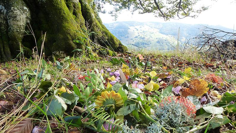NaturRetreat im Hochschwarzwald: eine magische Entdeckungsreise zu Dir selbst