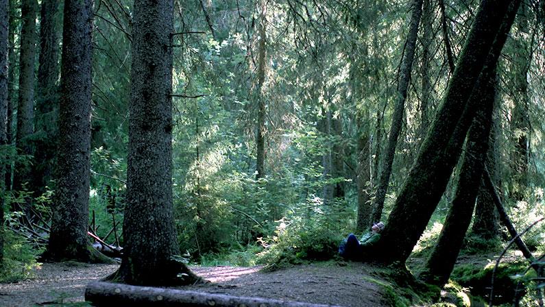 Naturwege-Selenpfade-Workhops-Waldbaden-intensiv