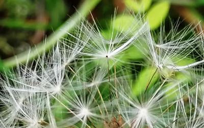 Das Element Luft und seine Bedeutung für uns Menschen