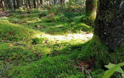 Seelenzeit – ich bin dann mal im Wald
